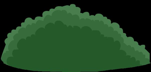 Bush3